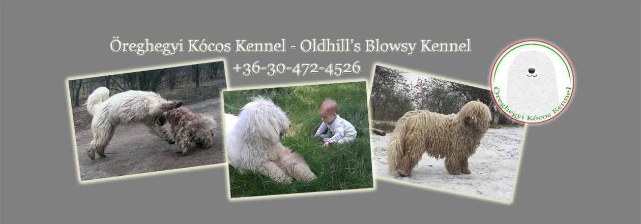 www.komondor-kennel.hu